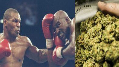 """صورة بعد سنوات الإفلاس.. """"أسطورة"""" الملاكمة يجني الملايين من زراعة """"الماريجوانا"""""""